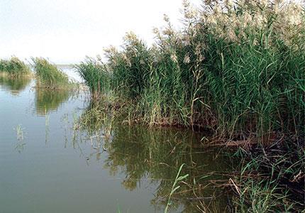 ارزیابی اثرات زیست محیطی طرح ساماندهی تالاب هورالعظیم