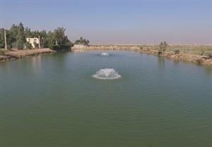 مطالعات، طراحی و نظارت بر اجرای پروژه 3300 هکتاری پرورش ماهیان گرمابی شمال خرمشهر